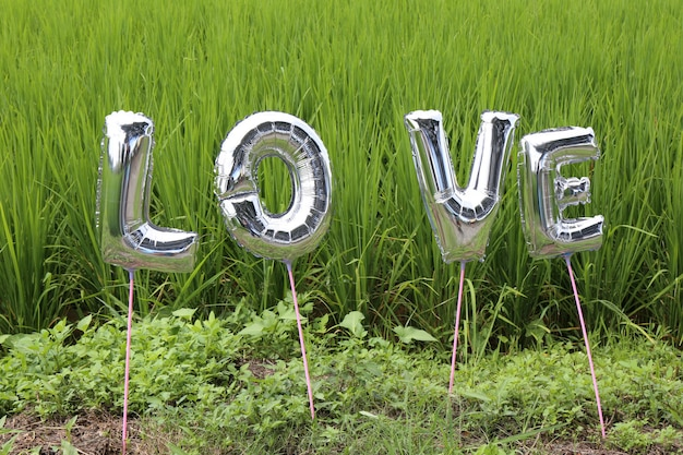 Love in grass field