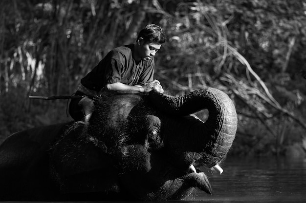 Love of mahout with his elephant, thailand