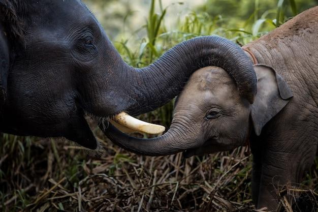 Любовь к слонам