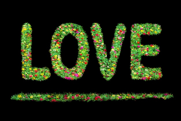 Love text with common zinnia beautifully with green leaves growing on isolated on black.