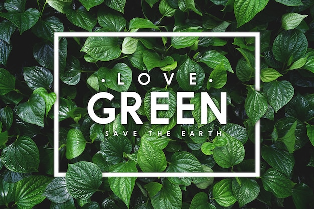 지구 개념을 사랑하십시오. 녹색 잎 배경
