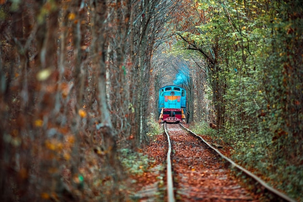 Love tunnel in autumn. railway and tunnel from trees