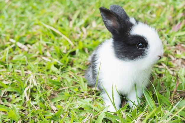 사랑스러운 아기 2 주간 태국 토끼