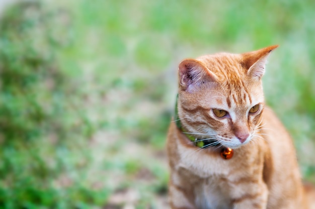 Lovely brown domestic cat in green garden