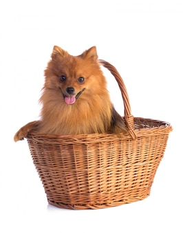 Lovely caramel-colored dog
