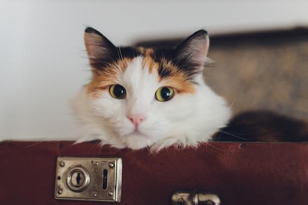 Прекрасный кот лежал на дорожной сумке.