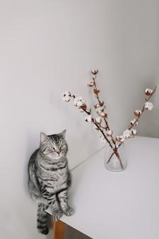 Милый кот позирует с цветами на белой поверхности в помещении