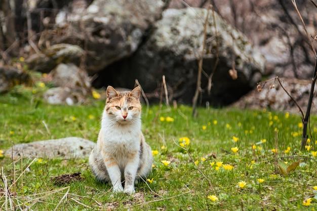 Милый кот сидит на траве, полной крошечных желтых цветов весной рядом с камнем