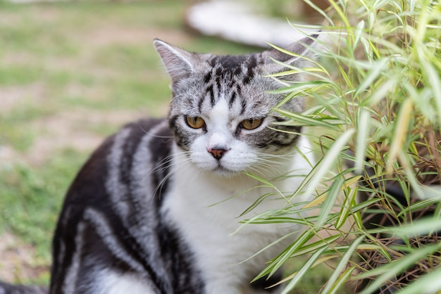 A lovely cat with bamboo tree, natural medicine plant for cats