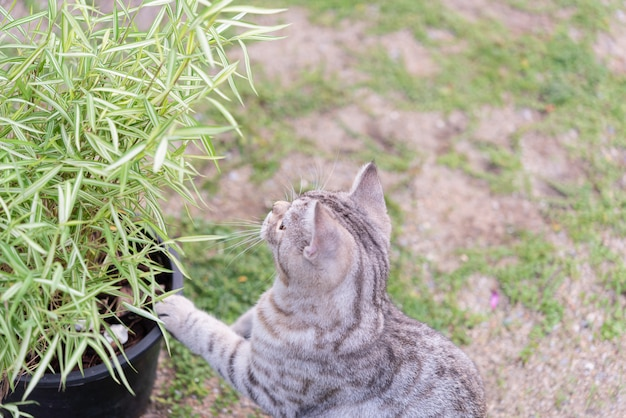 A lovely cat with bamboo tree,thyrsostachys siamensis gamble,natural medicine plant fot cats
