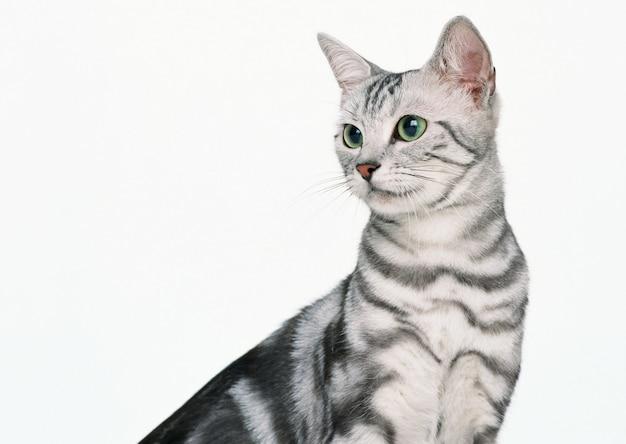 사랑스러운 고양이