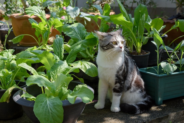 Lovely cute cat with beautiful yellow eyes sit in chinese cabbage vegetables garden home plant