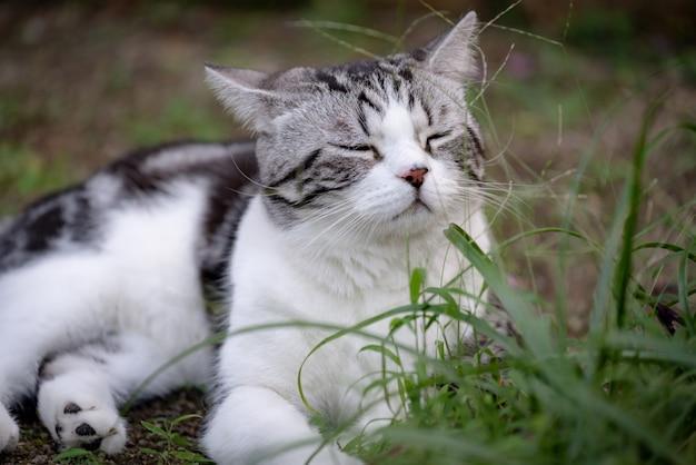 Lovely cute little cat with beautiful face sleep on green grass garden outdoor