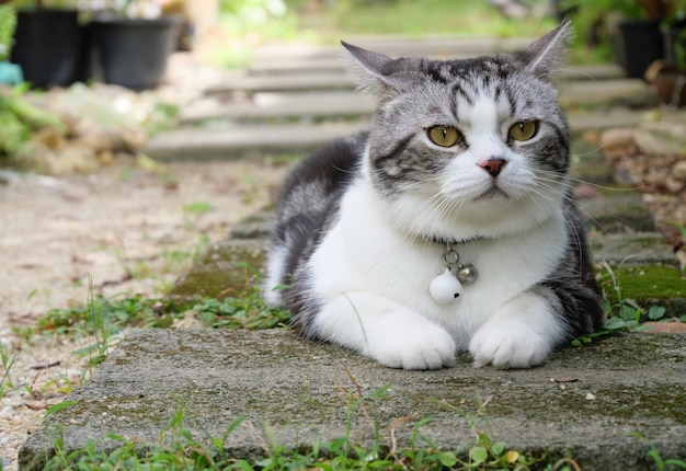 Lovely cute little cat with  beautiful yellow eyes in garden outdoor