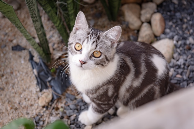Lovely cute little cat with beautiful yellow eyes on white sand in garden outdoor