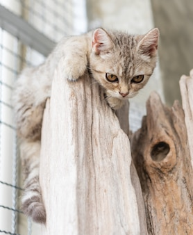 Lovely cute little cat on wood log looking down