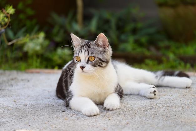 Lovely cute little cat