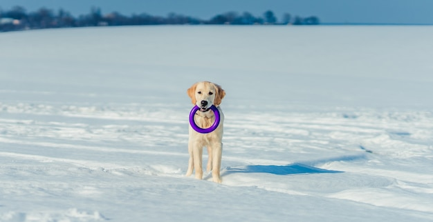 外で遊ぶ素敵な犬