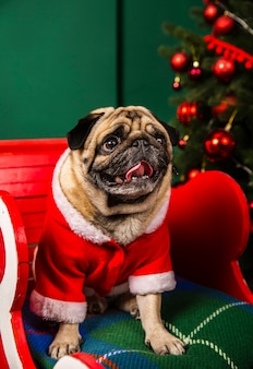 Lovely dog playing santa role