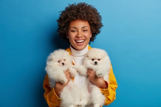 Bella ragazza etnica porta due cuccioli simili sulle mani, brividi con i cani, felice di avere tempo libero, allenarsi, prepararsi per la competizione animale, isolato sul muro blu.