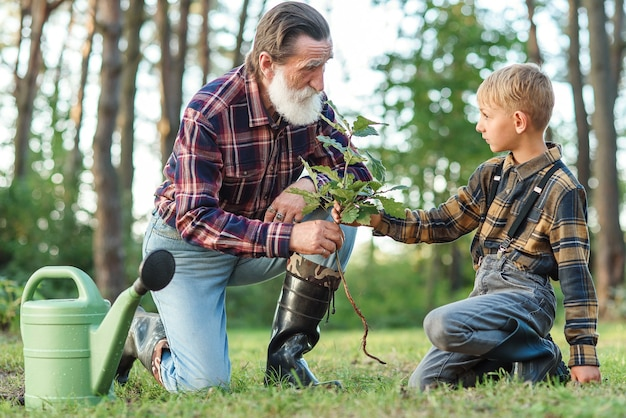 Lovely grandpa teaches his grandson to plant oak sapling into the ground among other trees in the forest.