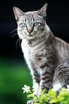 Прекрасный серый кот сидит на открытом воздухе