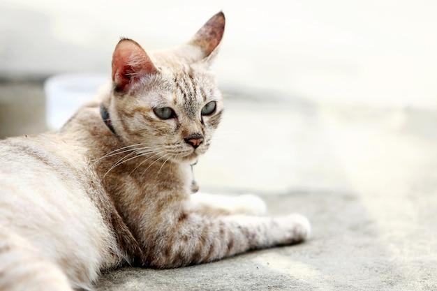 屋外に座っている素敵な灰色の猫