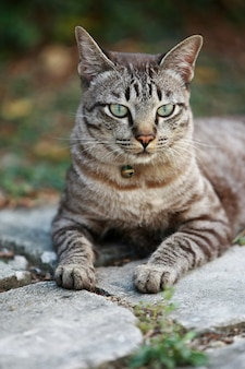 Lovely gray cat sitting at outdoor