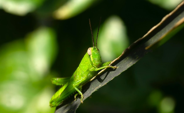 A lovely green grasshopper with blurred