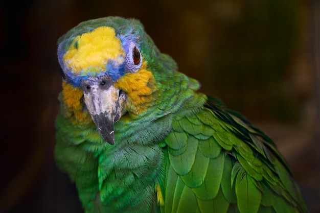 Lovely green parrot close up