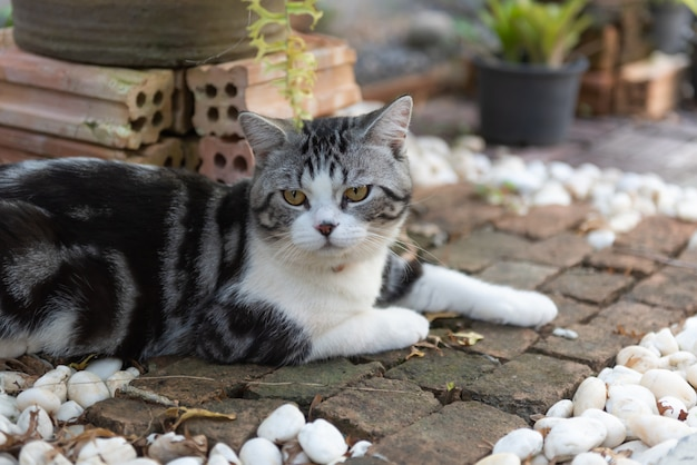 Lovely healthy cat with beautiful yellow eyes on brick floor in garden