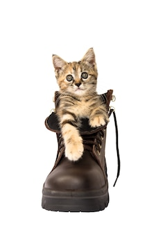 Lovely kitten in a brown safety shoe on white background