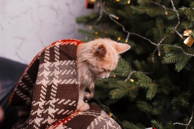 A lovely kitten is sitting and looking down near a christmas tree .
