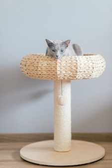 Lovely kitten lying in cat`s bed at home on gray wall.