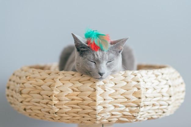 Lovely kitten lying in straw bed.