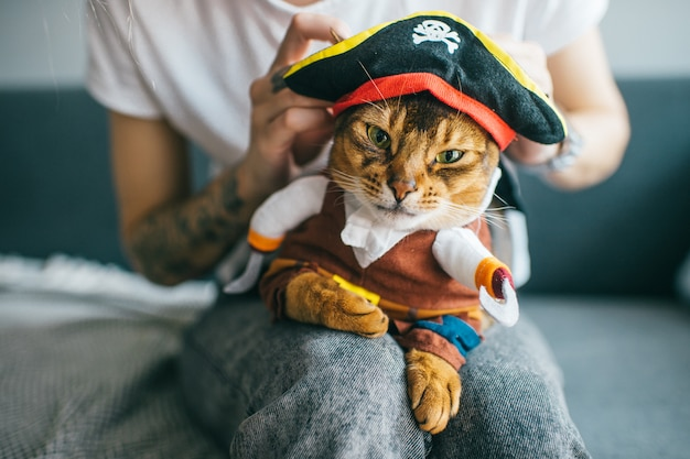 Lovely kitten in pirate costume lying on owner`s legs