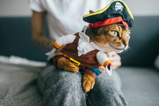 Lovely kitten in pirate costume.