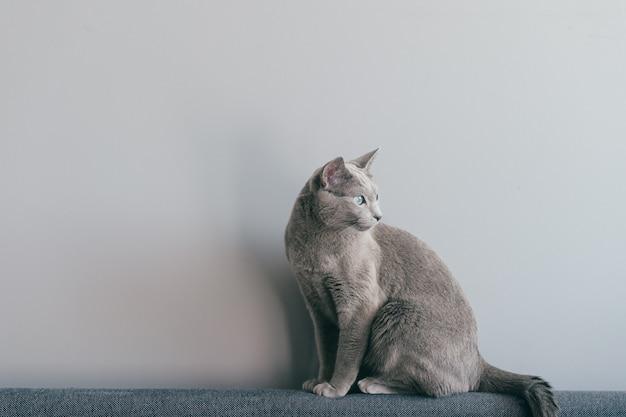 Lovely kitten sitting on sofa