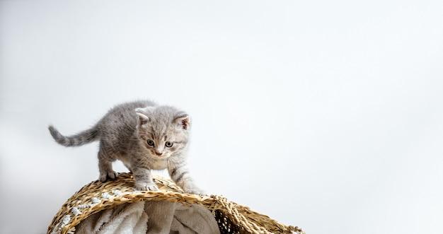 白の籐のバスケットに素敵な子猫