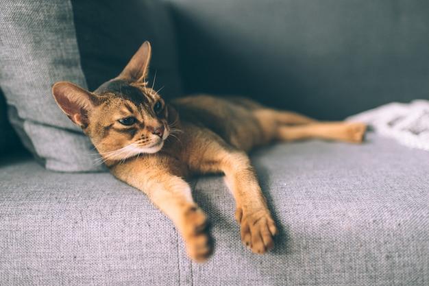 침대에서 편안한 사랑스러운 작은 새끼 고양이