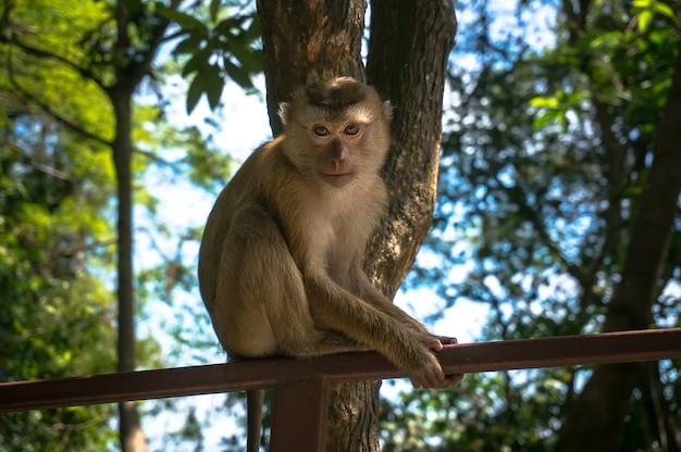 나무 정글의 배경에 막대기에 앉아 사랑스러운 원숭이