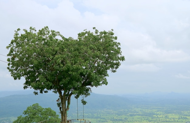 Lovely natural heart shape tree in phitsanulok province in thailand