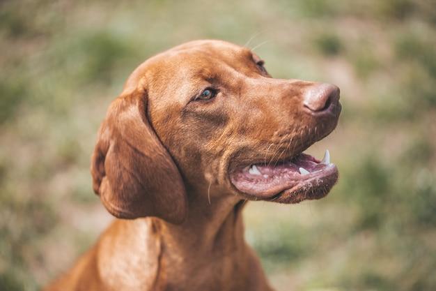 茶色の混合犬の素敵な肖像画