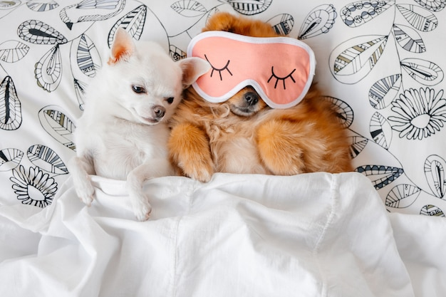 Симпатичный портрет смешных щенят лежа под одеялом.