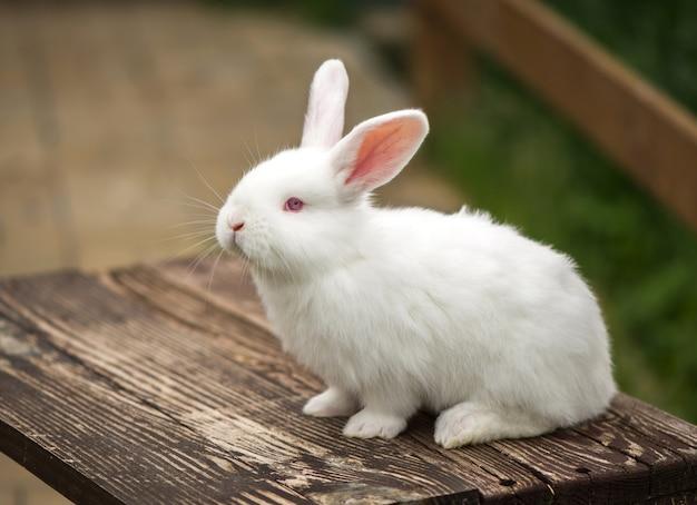 木製のテーブルの上の素敵なウサギ。動物の概念。
