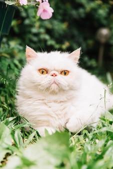 Прекрасный белый кот в природе