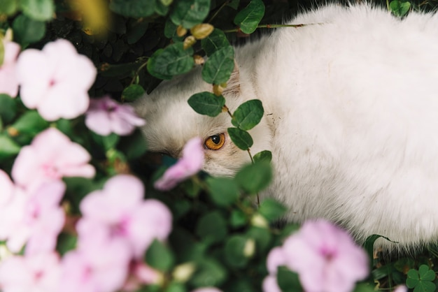 Lovely white cat in the nature