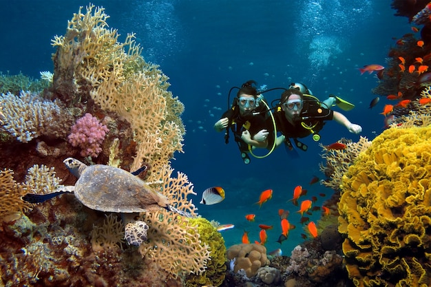 The loving couple dives among corals and fishes in the ocean