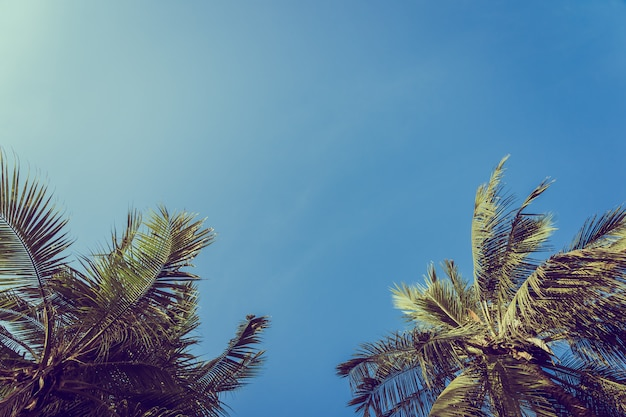 Low angle beautiful coconut palm tree with blue sky background