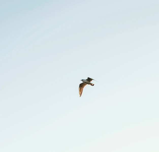 Low angle bird in the sky
